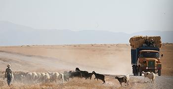 Dunes et Desert: quad, buggy, trekking, vtt, parapente, rafting